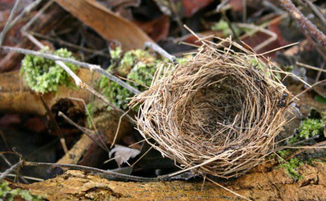 Многие существа считают вентиляционные трубы RV привлекательным местом для строительства своих гнезд.