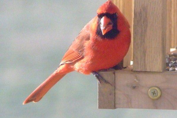Как не дать птицам клевать зеркала на машине