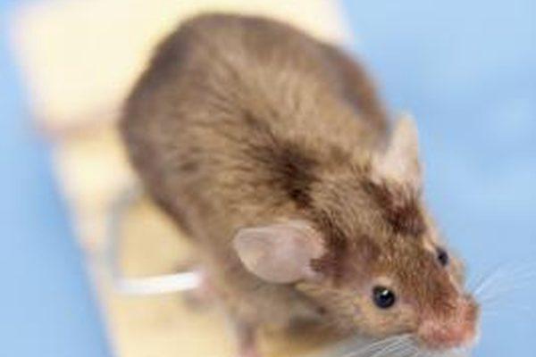 Как почистить гнездо мыши в своем автомобильном обогревателе