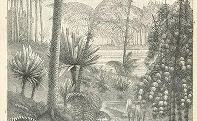 Печать каменноугольных растений девятнадцатого века