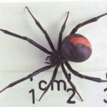 Как определить, что паучьи механизмы плохие