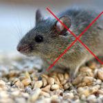 Как сохранить мышей вне автомобиля